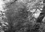 Bosque de Rimet