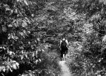 Bosque de Cetea